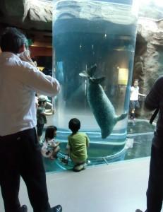 2013.7.24 旭山動物園(アザラシ館)