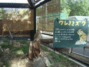 2013.7.24 旭山動物園(ワシミミズク)